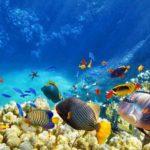シューティングゲーム感覚のカジノゲーム「Go Gold Fishing 360」を大解剖!